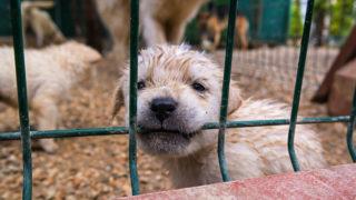 puppy-636119096-16x9-320x180