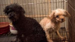 puppy-mill-358529